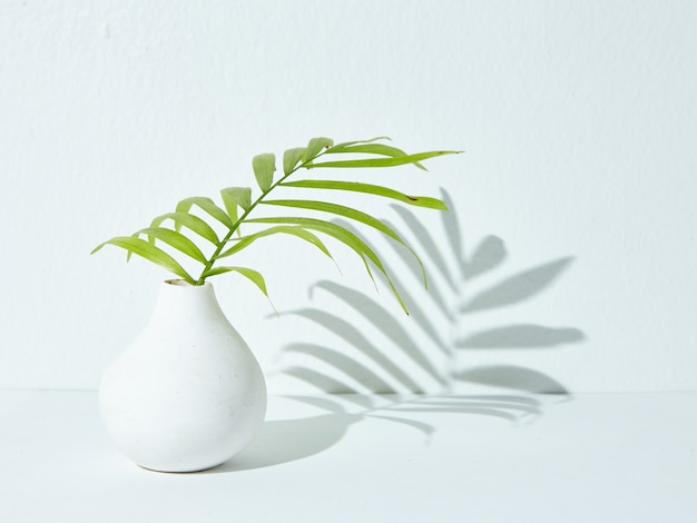 Green houseplant in a white ceramic vase with its shadow falling on a white surface Free Photo