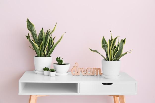 Green houseplants on table near light wall in room Premium Photo