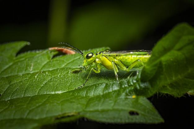 Зеленое насекомое сидит на зеленом листе Бесплатные Фотографии
