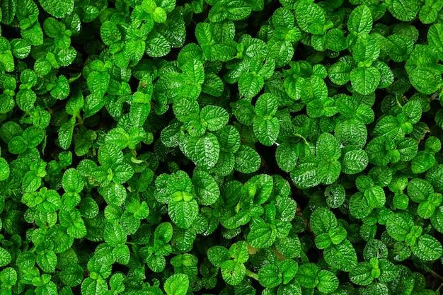 Green ivy bush wall in garden Photo