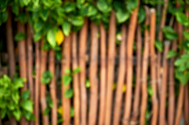 Green ivy creeper and wooden fence blurry Premium Photo