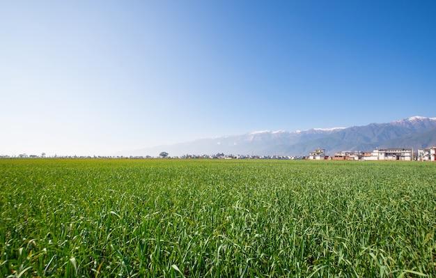 Green landscape in a farm Free Photo