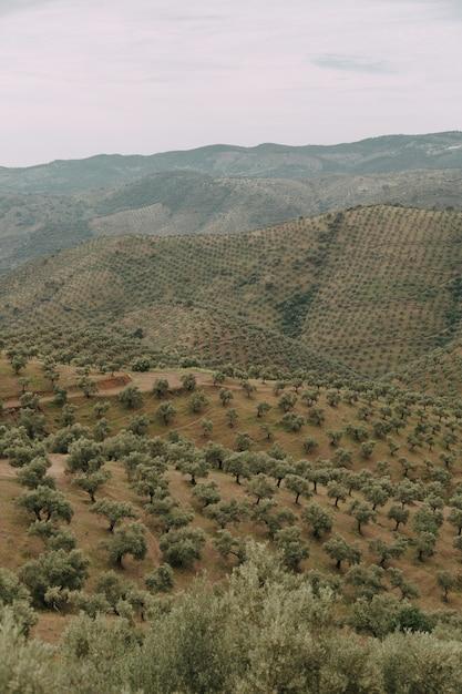緑の木々と嵐の雲の下の山がたくさんある緑の風景 無料写真