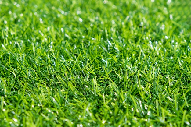 Green lawn with blue sky.  spring landscape in sunny day. Premium Photo