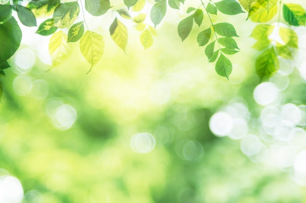 Green leaf on blurred greenery in garden with copy space. Premium Photo