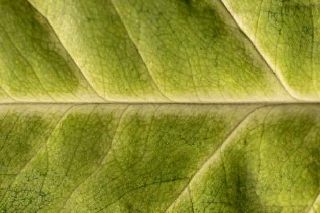녹색 잎 근접 유기 배경 프리미엄 사진