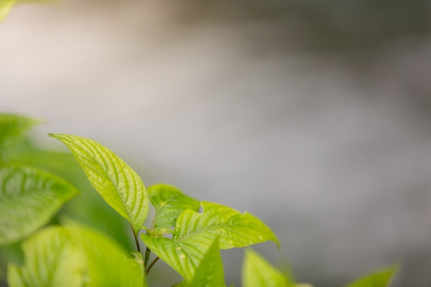 Green leaf in the forest. Free Photo
