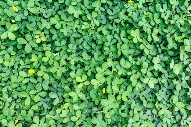 진한 녹색 질감 배경에서 녹색 잎 프리미엄 사진
