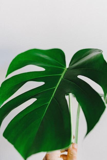 白い背景の上の緑の葉 無料写真