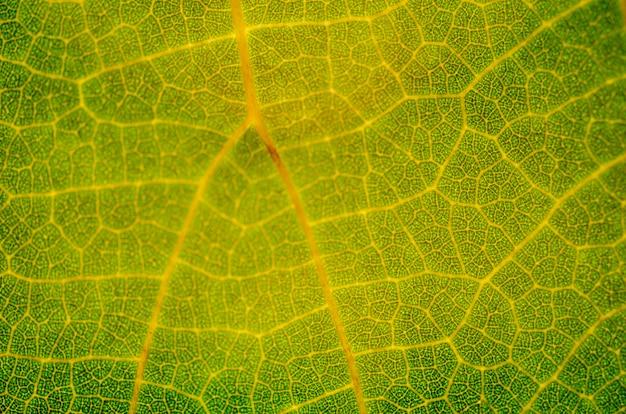 Green leaf pattern, blurred pattern background Premium Photo