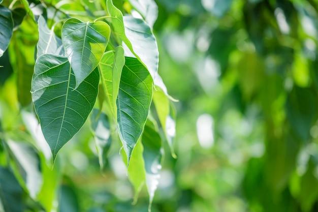 Green leaf pattern Free Photo