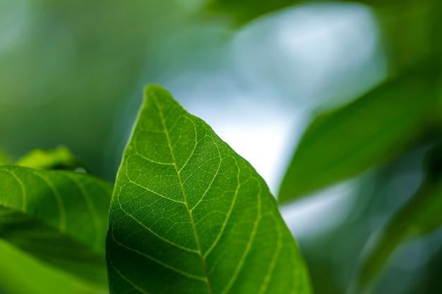 Green leaf pattern Premium Photo