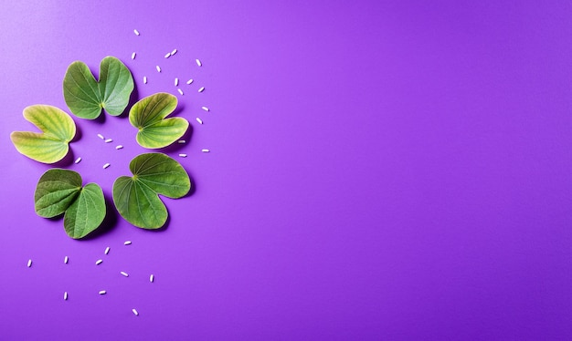 Green leaf and rice on purple pastel background. dussehra indian festival concept. Premium Photo