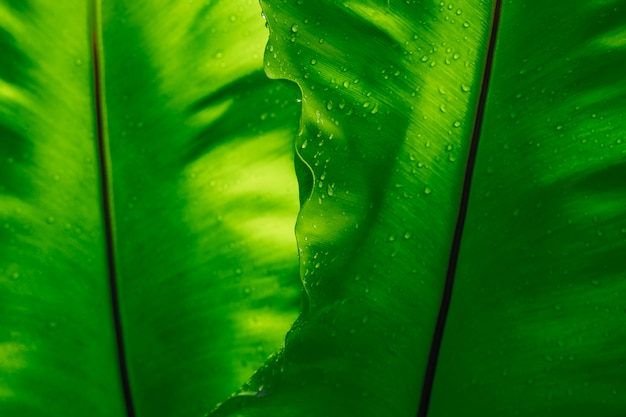 Green leaf texture with rain drop, empty space background. Premium Photo