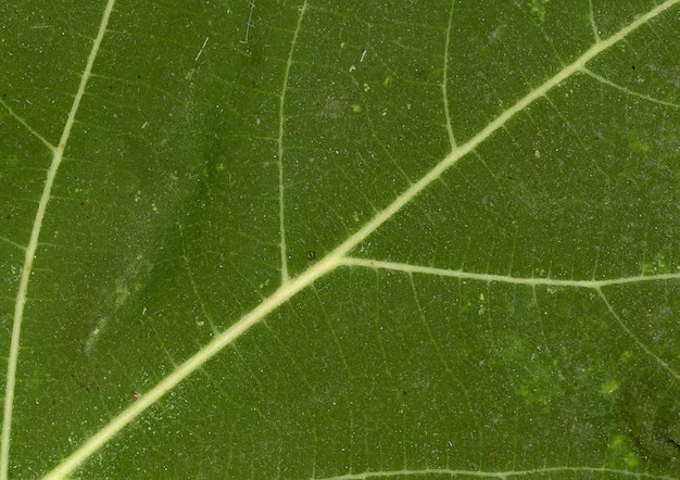 Green leaf vein Free Photo