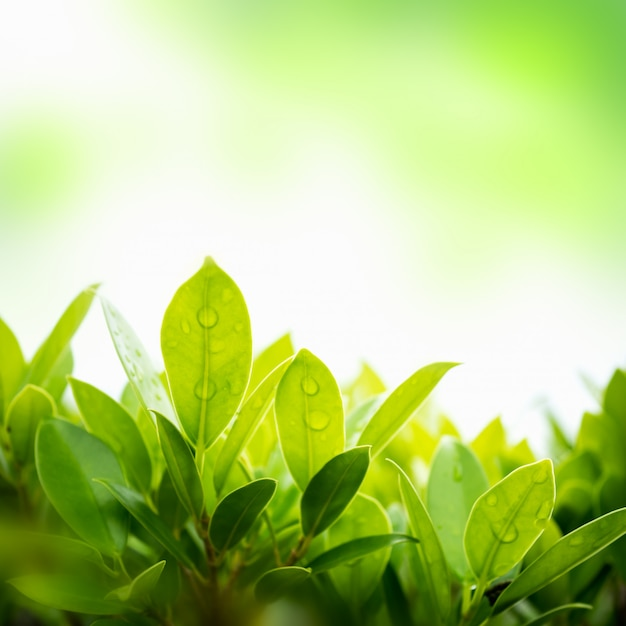 Green leaf with blurred natural background in the garden. Premium Photo