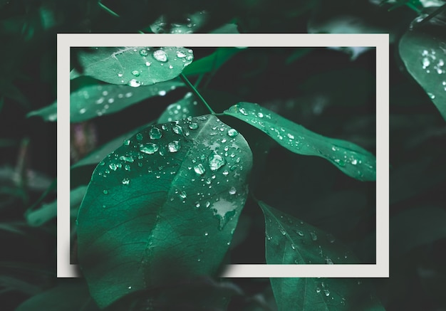 Green leaf with dew and white frame on dark nature background. Premium Photo