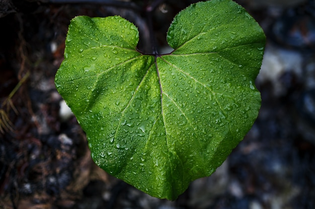 Green leaf with drops of water. Premium Photo