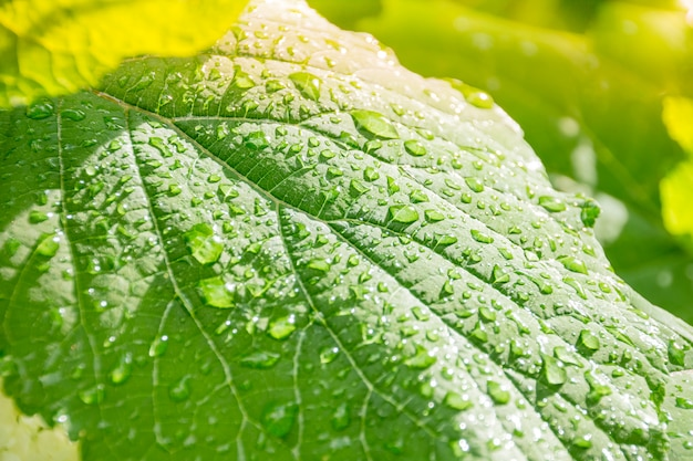 Green leaf with transparent drops after the rain Premium Photo
