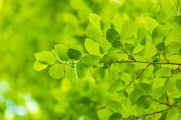 Зеленый лист с каплей воды на черном фоне Бесплатные Фотографии