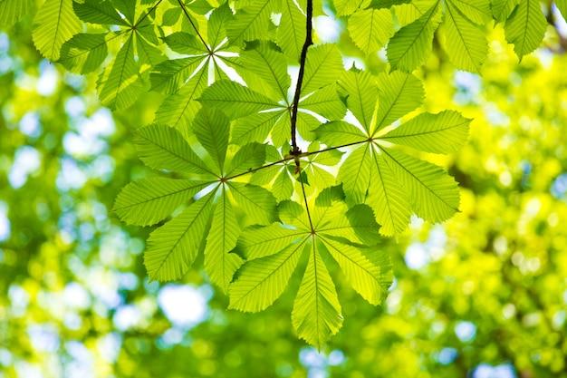 黒の背景に水滴と緑の葉 無料写真