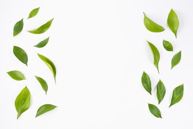 측면 레이아웃에 녹색 잎 프리미엄 사진