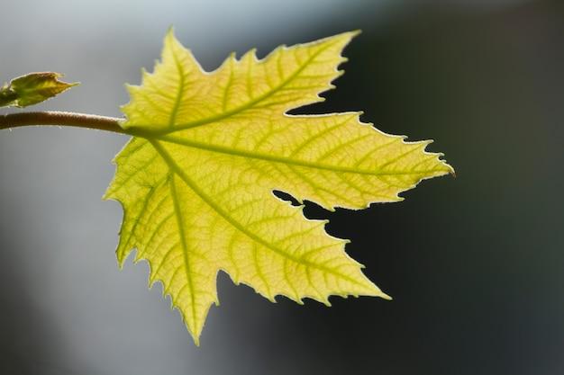 Green leafs on the sun Premium Photo