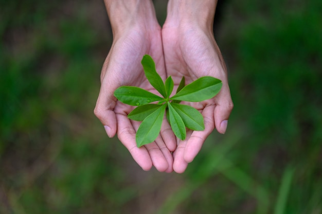 Green leafy seedlings put on the hands of men Premium Photo