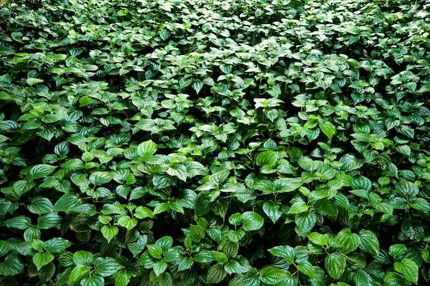 グリーン休暇自然パターン背景環境コンセプトアイデア Premium写真