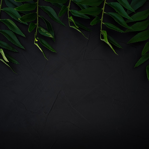 Green leaves background. green leaves color tone dark Free Photo