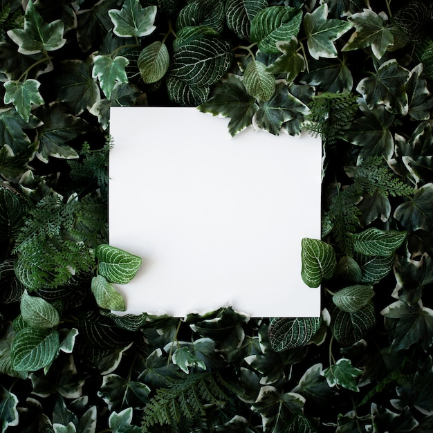 Green leaves background with white paper frame Free Photo