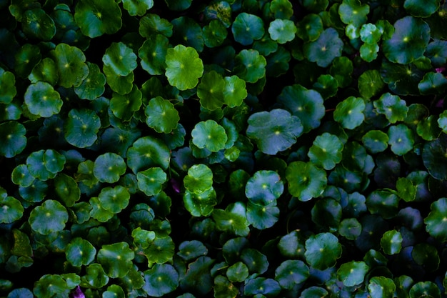 Green leaves background Premium Photo