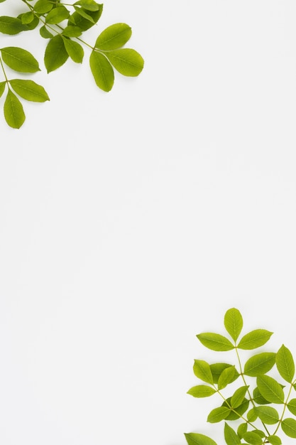 Green leaves branch at corner of the white background Free Photo