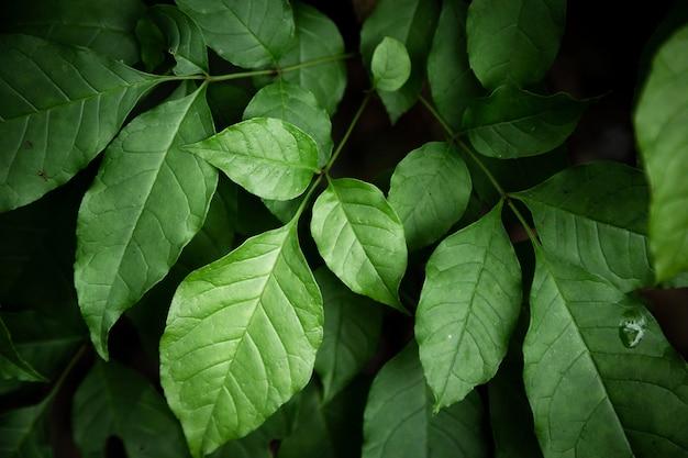 Green leaves closeup Free Photo