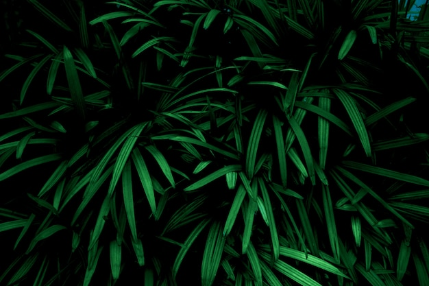 Green leaves color tone dark  in the morning.environment,photo concept nature and plant. Premium Photo