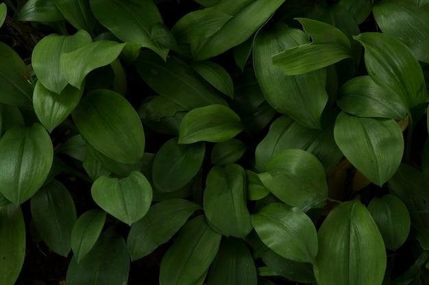 Green leaves in dark tone background Premium Photo