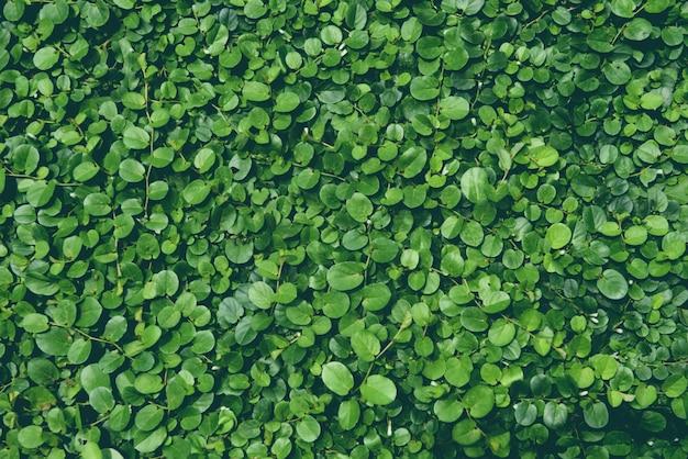Зеленые листья растут на стене Premium Фотографии