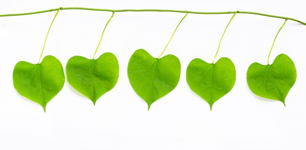 Green leaves heart shaped on white background Premium Photo