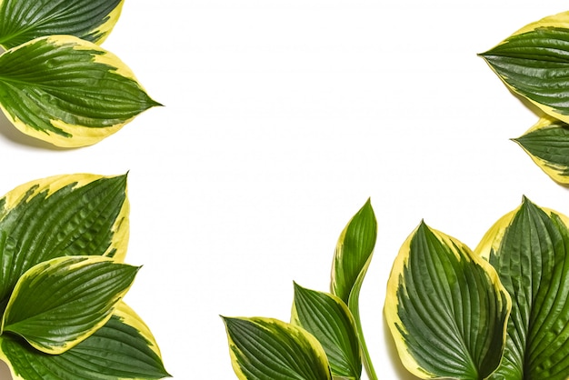 Green leaves isolated on white Premium Photo