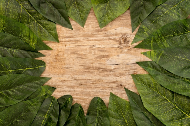 Green leaves laid out on a wooden brown background Free Photo