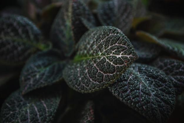Green leaves nature background Premium Photo