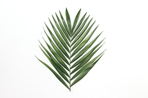 흰색 배경에 야자수의 녹색 잎 프리미엄 사진