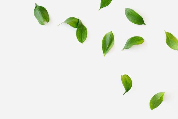 녹색 나뭇잎 흰색 배경 무료 사진