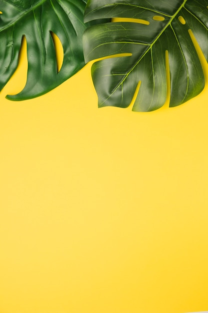 Green leaves on orange background Free Photo
