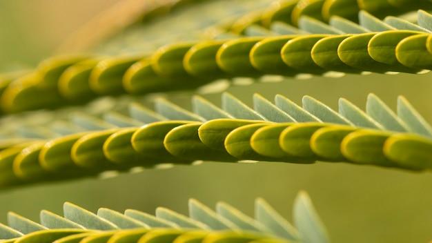 녹색 잎 유기 배경 무료 사진