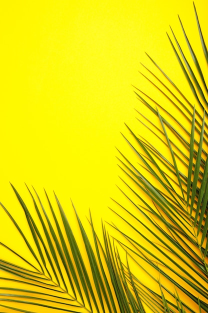 Green leaves of palm tree on yellow background, top view Premium Photo