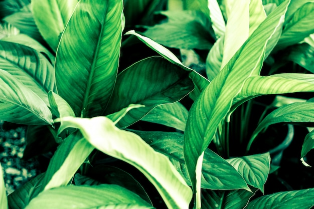 Green Leaves Pattern Background Natural Background And Wallpaper