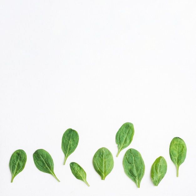 Green leaves of spinach Free Photo