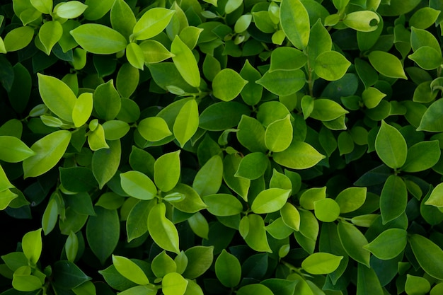 Green leaves texture background Premium Photo