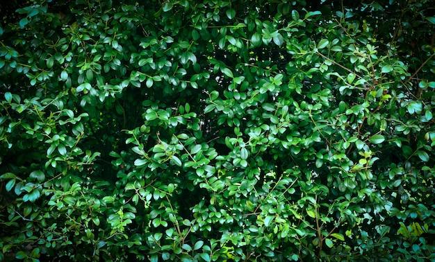 Зеленые листья текстуры фона Premium Фотографии